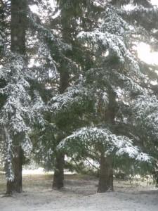Snow in backyard Nov 2010