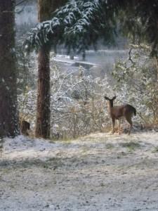 Deer in backyard Nov 2010