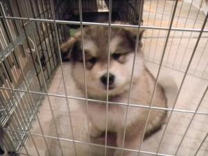 New Puppy 1-26-11