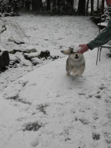 Get the snowball!