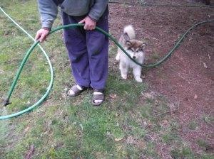 Willow the garden helper