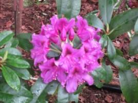 Garden Flowers 2013 (6)