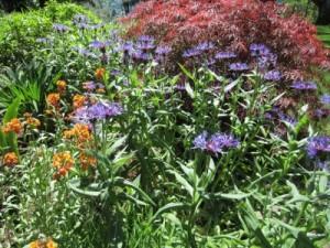 May 2013 Sunroom garden (4)