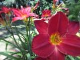 Flowers July 2013 (1)