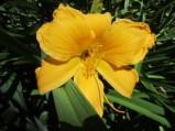 Flowers July 2013 (4)