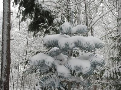 December 2013 Snow 020