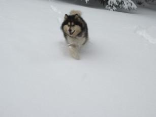 December 2013 Snow 021