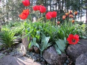 2014 April Garden Flowers