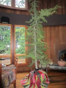 Christmas Tree 2014 029